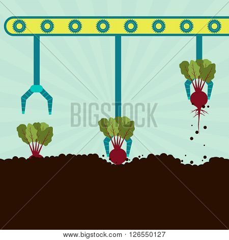 Mechanical Harvesting Beetroot