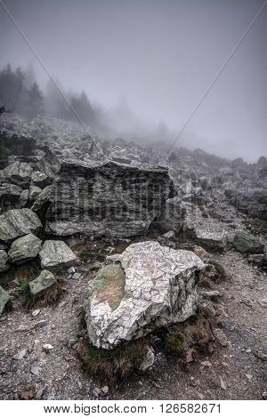 Rocks on the foggy hill under forest