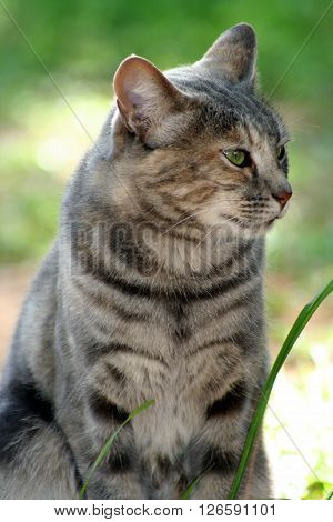 Tiger Sandy cat kitten beautiful eyes smile good animal character kind