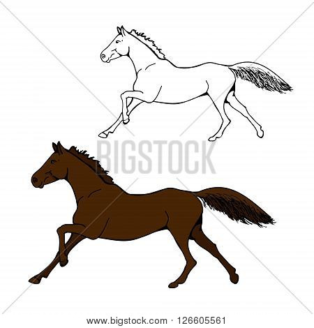 Two images of the horse. The contour and color figure on white background. Bay horse galloping. Vector illustration for child book