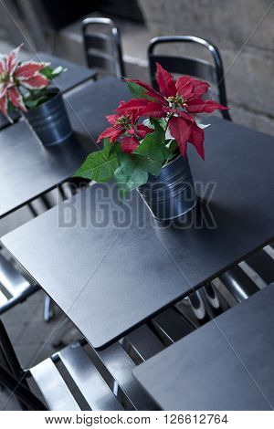 Potted plant on the table of a French bistro