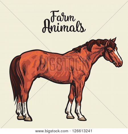 brown horse, vector illustration sketch of a hand-drawn with a single animal, the only brown horse, pet and animal fermeskoe young stallion, a horse farm, Chestnut horse isolated