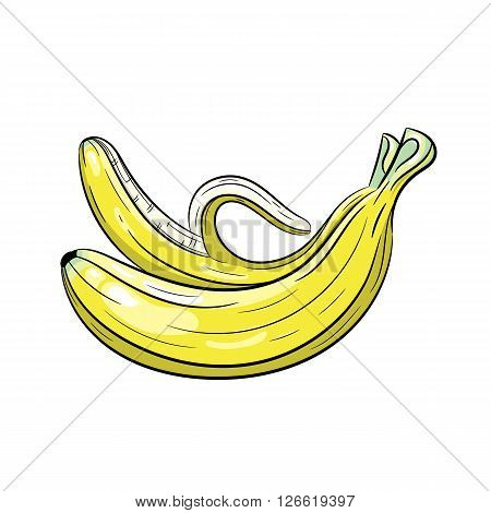 Vector banana illustration. Banana isolated on white background. Vector sketch hand drawn fruit - stock vector