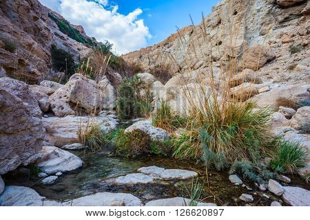 Typical Middle Eastern landscape. The stream of cold clear water flows on the beautiful gorge of Ein-Gedi, Israel