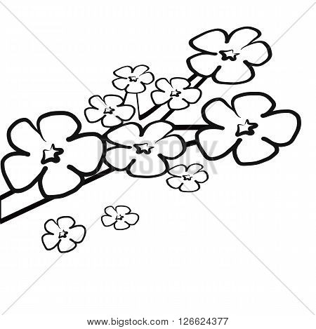 Colorless cherry blossom flower on branch for coloring book illustration vector isolated on white background
