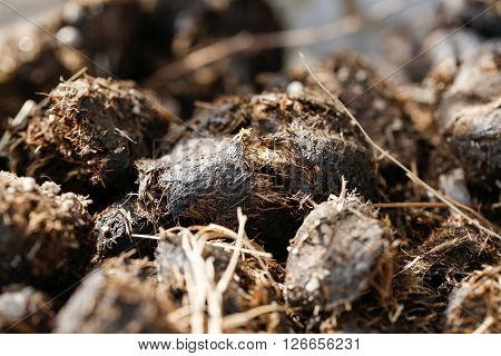 Pile of fresh horse manure. Agriculture organic gardening green manure and fertilization concept.