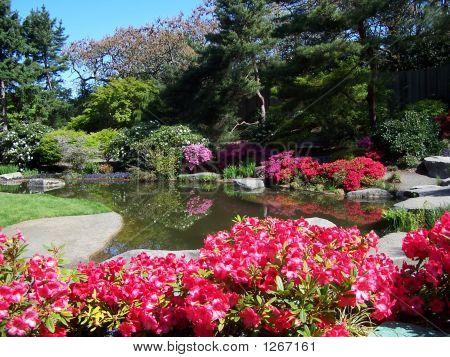 Pond And Azaleas