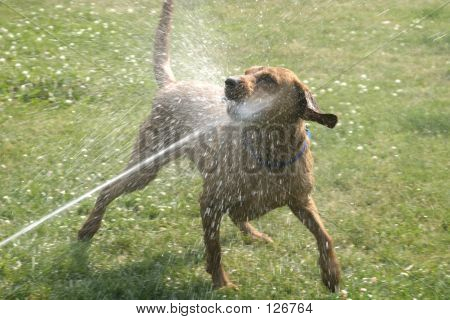 Wrigley And The Sprinkler