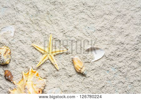color seashells and gold seastar on white sand background