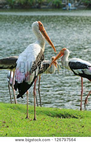 The Big Flamingo Bird in Thailand Zoo