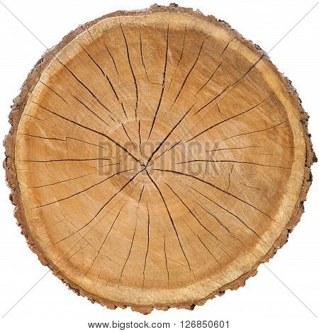 cross section brown tree stump slice with rings cut fresh from the forest