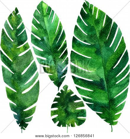set of vector watercolor green  leaves of palm tree, exotic leaves, hand drawn vector design elements