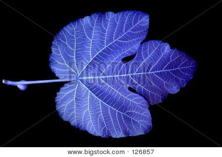 Leaf Detail In Blue