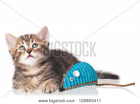 Cute kitten with toy mouse isolated on white background
