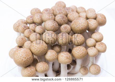 Brown Beech Mushrooms ( Buna Shimeji) Isolated On White