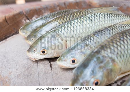 Freshwater fishes susceptible host of opisthorchis viverrini poster