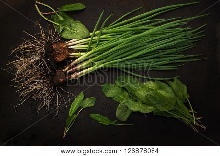 fresh green onions with root and sorrel scattered on a dark grunge metal background. Blackout photos.