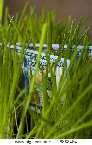 One hundred Dollar bills in green grass. Growth of money. Financial concept.