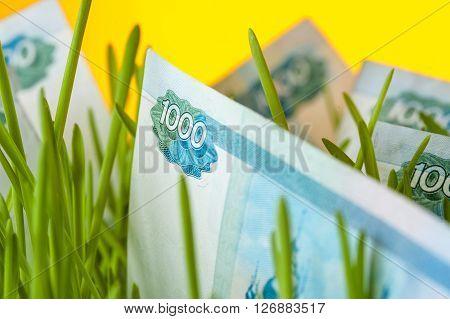 Russian ruble bills in green grass. Appreciation of ruble. Financial concept.