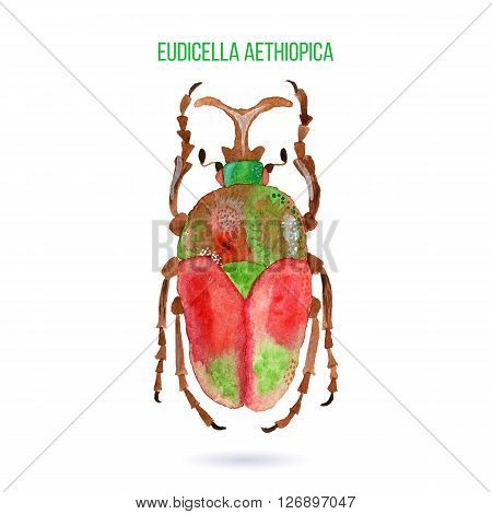 Colorful hand painted watercolor bug beetle isolated on white background. Bright insect named Eudicella Aethiopica. Green red and brown graphic design element. Raster illustration.