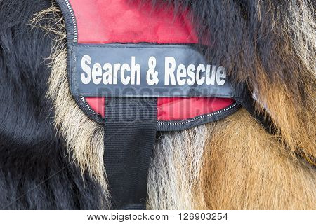 Sofia, Bulgaria - April 20, 2016: Search and rescue dog. The animal is part of the rescue team of Red Cross Organization.