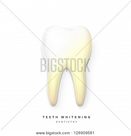Realistic tooth isolated on a white background. White tooth for dental services. Tooth 3D. Tooth with a transparent shade. Molar. Teeth whitening. Tooth for a banner. Yellow teeth . teeth whitening