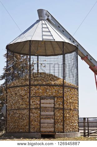 Filling corn cobs into a corn crib during fall harvest in Wisconsin.