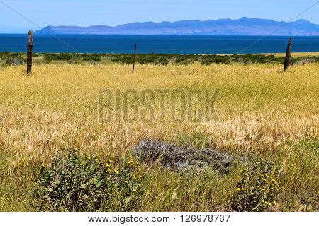 Rustic fence on grasslands with wildflowers taken at Santa Rosa Island, CA