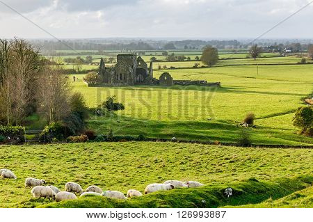 Landscape photo of Hore Abbey in Cashel county Tipperary ** Note: Soft Focus at 100%, best at smaller sizes