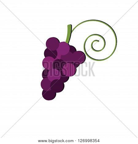 Bunch of grapes isolated on white background. Winemaking. Logo vineyards or shop. Logo grapes. Grapes vector.
