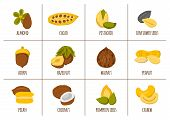 Vector cartoon nuts and seeds icons. Healthy organic snack. Cartoon nuts types: walnut almond hazelnut coconut cashew. Vegan protein source. Allergic product. Healthy vegan nutrition. Healthy oils poster