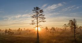 Misty bog landscape with pine trees and rising sun.