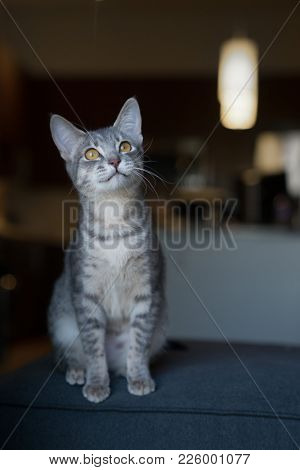 Curious kitten looking out of window, focus on eyes, shallow depth go field.