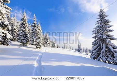 On The Lawn Covered With White Snow There Is A Trampled Path That Lead To The Dense Forest In Nice W
