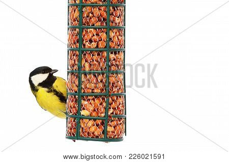 Great Tit On Nut Feeder In Winter ( Parus Major ); Bird Isolated Over White Background, With Place F