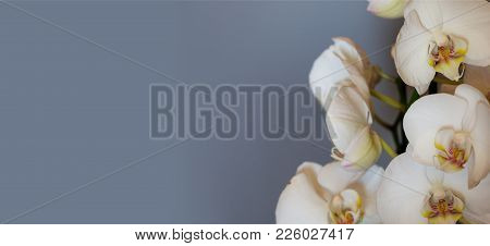 Orchid Flowers On Blue Gray Background, Banner, Copy Space, Close Up View With Details