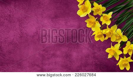 Amazing Background With Yellow Flowers Daffodils