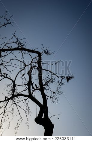 Silhouette Pf A Tree With A Bird Flying Off It At Malaga, Spain, Europe