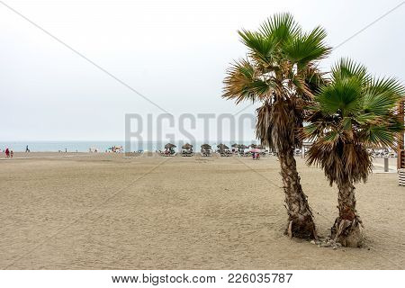 Twin Palm Trees Along The Malagueta Beach With Ocean In The Background In Malaga, Spain, Europe