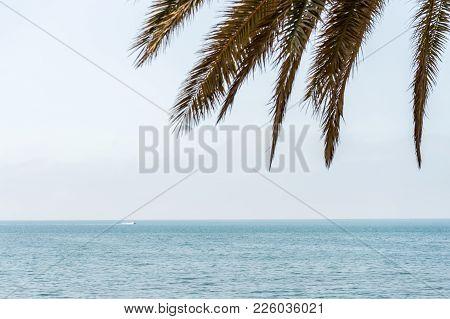 Palm Tree Leaves Against The Backdrop Of A Ocean At Malagueta Beach, Malaga, Spain, Europe