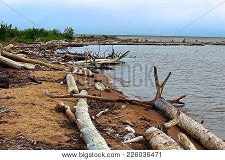 Driftwood Washing Up On The Sandy Shores.