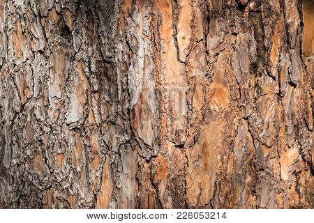 Natural Background Made Of A Closeup Of Brown Tree Bark With Wide Grooves And Spots Of Sunlight.