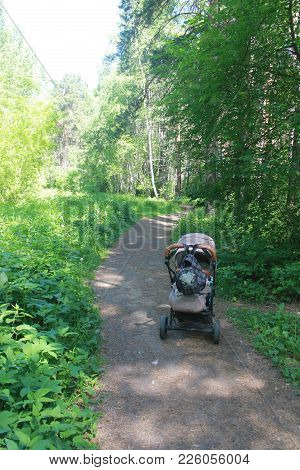 Children Sleeping Outdoors In Forest With Fresh Air In Strollers During Summer Day