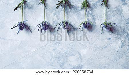 Amethyst Sea Holly Flowers on gray stone background (flat lay arrangement)