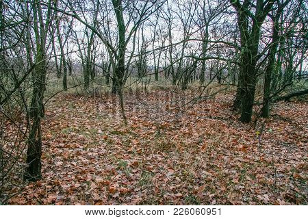 Deciduous Wind-sheltered Forest Stands