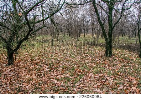 Deciduous Wind-sheltered Forest Stands In The Taurian Steppe. Zaporozhye Region, Ukraine. December 2