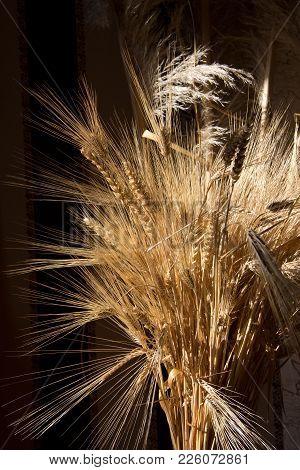 Brightly Lit A Sheaf Of Wheat On A Dark Background