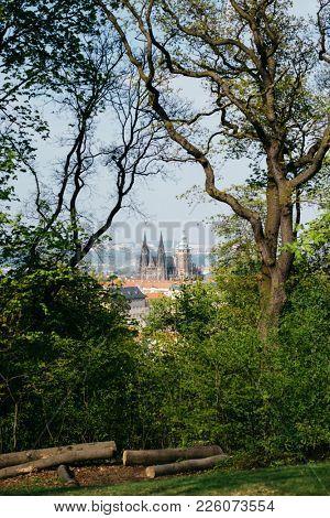 Prague Castle visible through thickets of trees in the Petrin Garden in springtime, Prague, Czech Republic