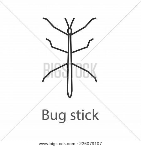Stick Bug Linear Icon. Ghost Insect. Phasmid. Thin Line Illustration. Contour Symbol. Vector Isolate