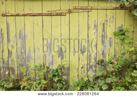 Flaky Green Paint Covered Wooden Slats With Rusty Hinges And Plant Leaves.